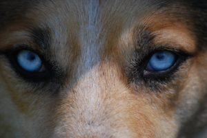 eyes, animal, nature